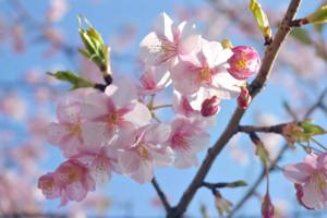 【ネイルサロン衛生管理士講習】5月14日(土)開催申し込みについて 埼玉県所沢